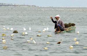 Arena blanco fisherman.jpg