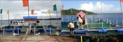 Tungawan Mariculture Zone, SibugayLaunched – March 03, 2007 Area – 500 Hectares