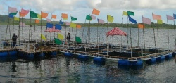 Mariculture farming in The Philippines
