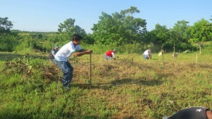 Reforestation project of DENR-PENRO ISABELA in San Manuel, Naguilian, Isabela.jpg